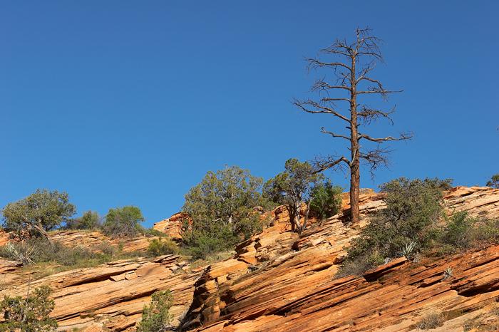 Lone tree on the rocks.