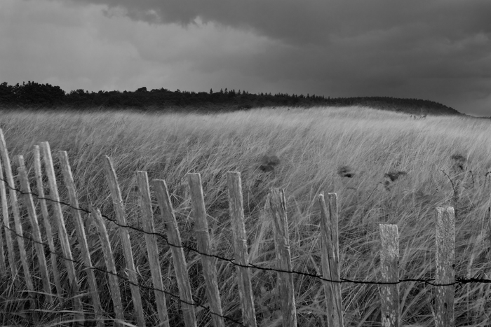 Popham Beach, Beach, Maine, Phippsburg, Black & White, New England, Reeds, Fence, photo