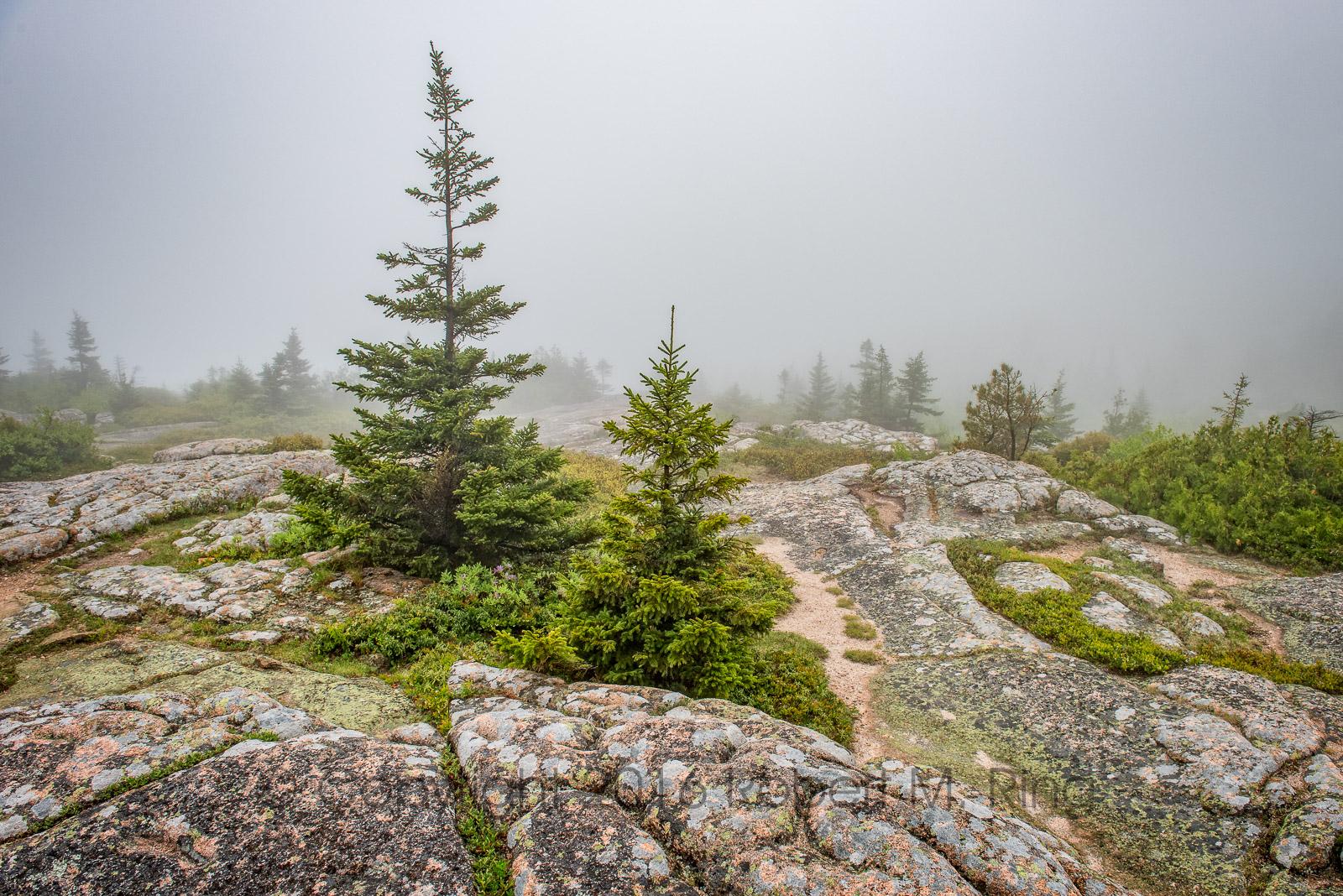 Acadia, Cadillac Mountain, New England, Fog, scenic, pine tree,