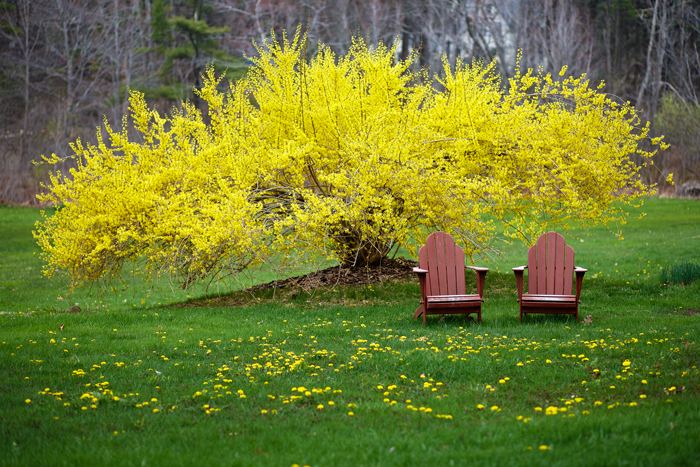 Chairs, Pair of Chairs, Backyard, yellow, New England, photo