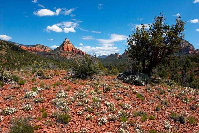 Sedona, Spring, Arizona, Springtime, West, West of New England, photo