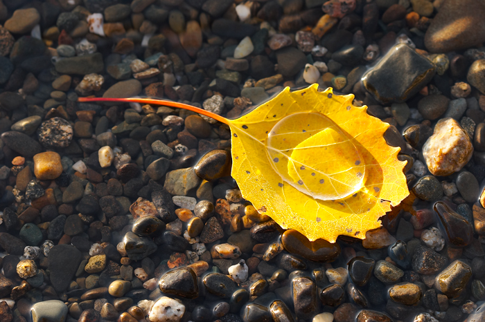 Leaf, Fall, Foliage, Water, Shore, Nature, photo