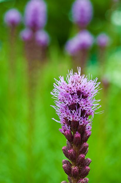 flower, purple, up close, nature, photo