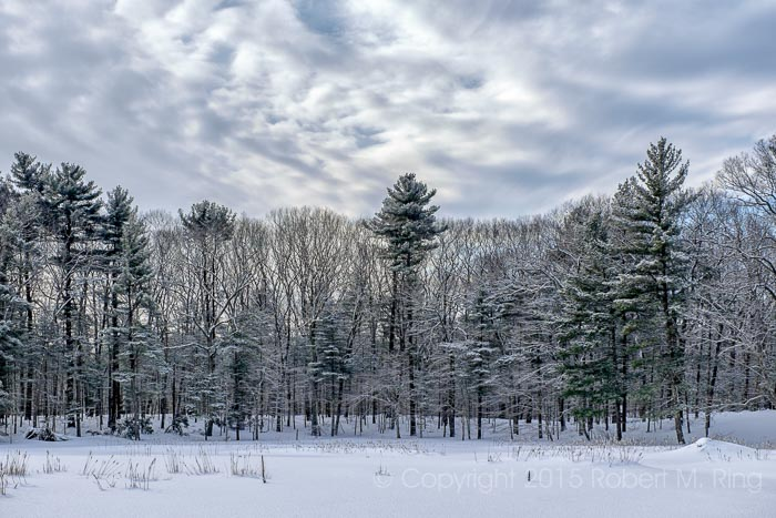 Snow,Willowdale State Forest, New England, photo