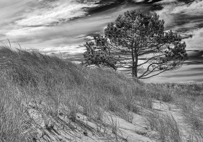Wingaersheek Beach, Massachusetts, Sand, Reeds,Black & White, Gloucester, photo