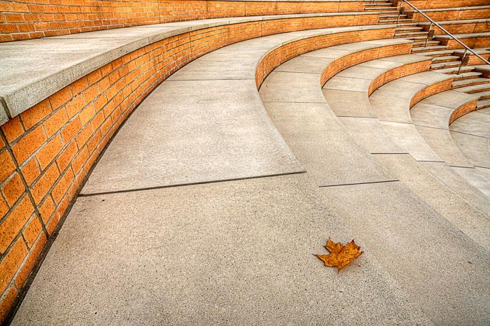 Amphitheater, Cambridge, MA, alone, leaf, photo