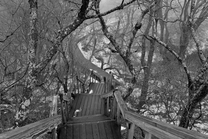 Taken in January of 2011 on a winter day that had fog from the warm temps and snow on the ground. Made for an eerie walk...