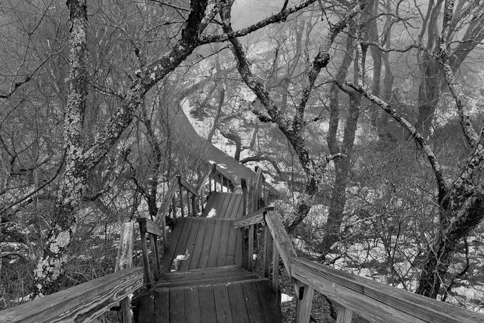 Hellcat Trail,Winter, Fog, photo