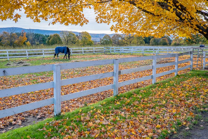Berkshires, Equestrian Center, horse, New England, foliage, New England Photo Workshops, photo