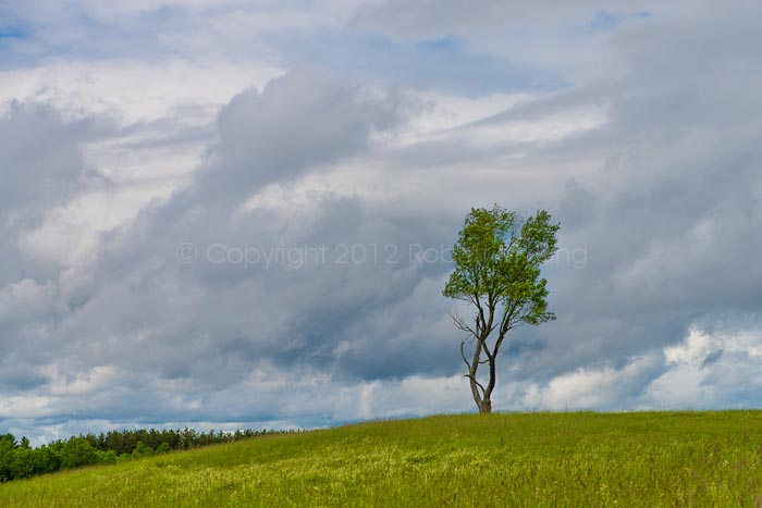 New England, Maine, tree, lonely, photo