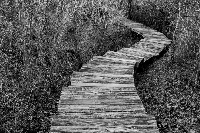 Following the boardwalk through the marsh....