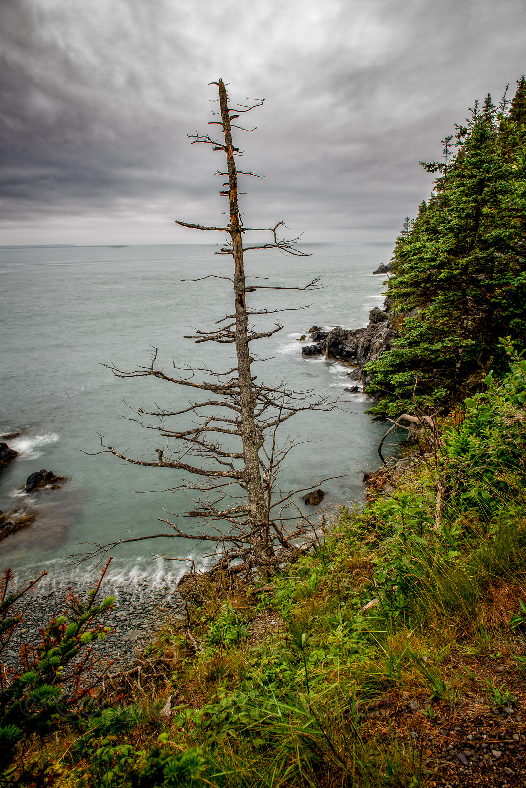 Surviving along the BOLD Coast of Maine is not an easy task as this dead tree demonstrates.