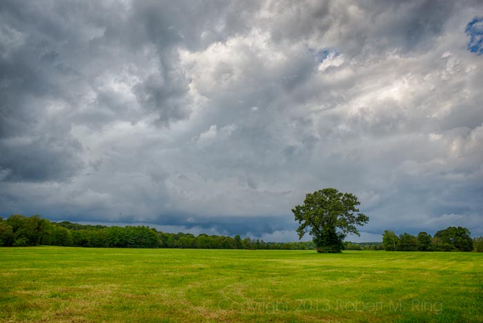 Don't you just love lonely trees? I know I do. This one was about to face the storm.