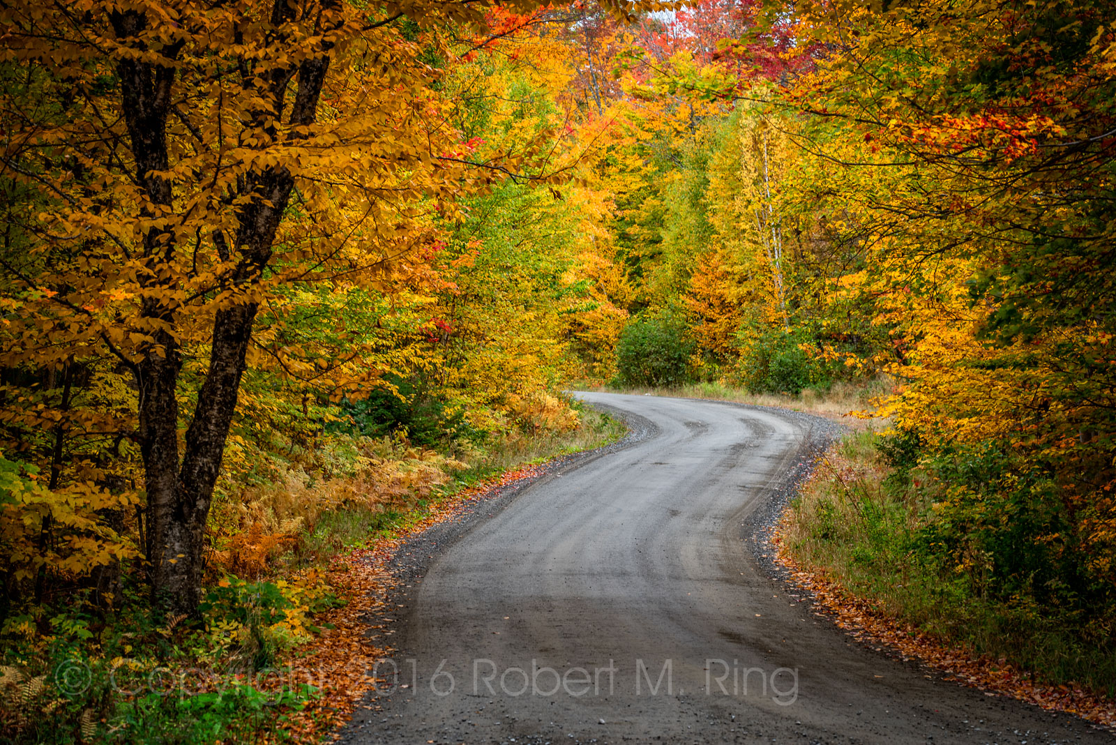 A camp road in central Maine (also a fire road) where the foliage this year 2016 was really better than expected!