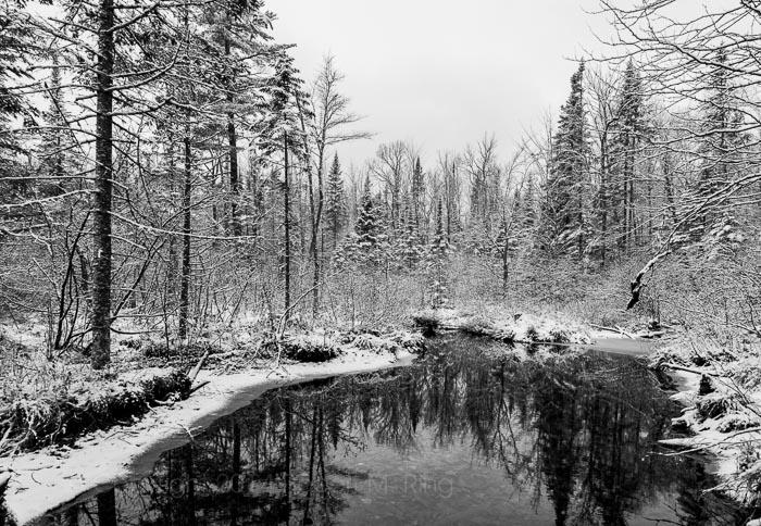 Schoodic Lake, Maine, New England, pond, water, frog, lake, photo
